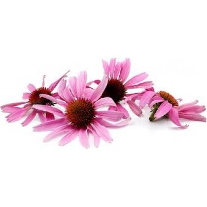 Echinacea Powder 50g 紫锥花粉