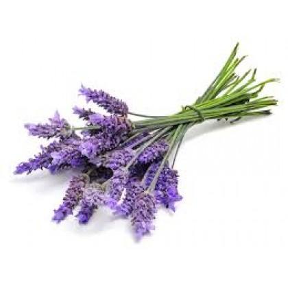 Lavender Essential Oil 100ml 薰衣草精油