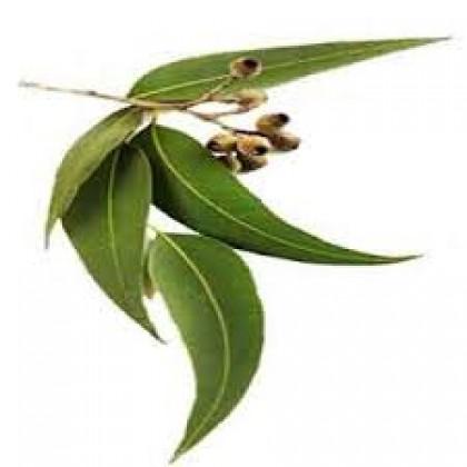Eucalyptus Essential Oil 30ml 尤加利精油